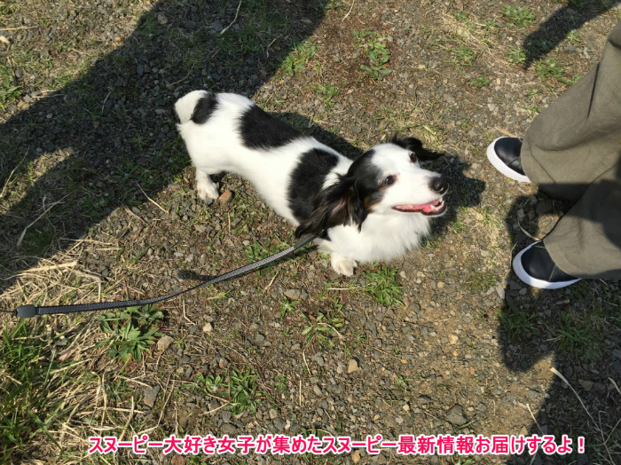 スヌーピーJ号メットライフ生命北海道小樽市銭函63-1